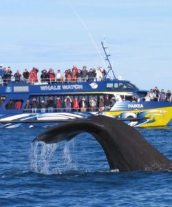 Kaikoura Whale Watch - stay at a Holiday Park