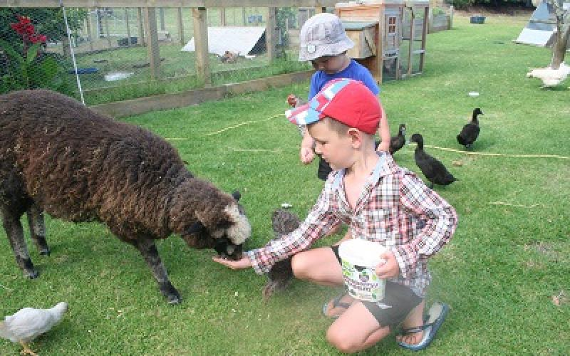Pukenui Holiday Park - Farm animals